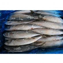 고등어 국내산 10kg (30-34미 내외)