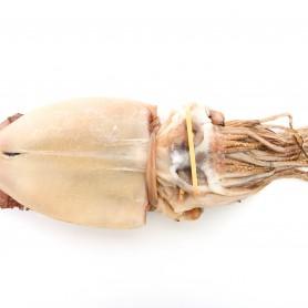 반건조 오징어 10미(대/특대)